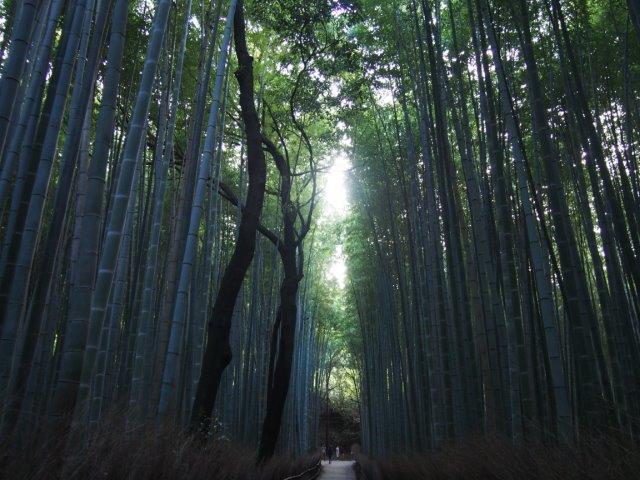 """嵐山""""竹林"""""""