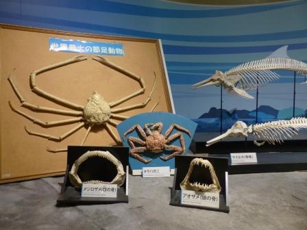 愛媛県総合科学博物館 動物 3