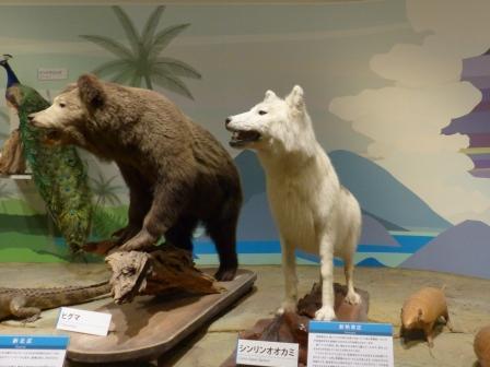 愛媛県総合科学博物館 動物 1