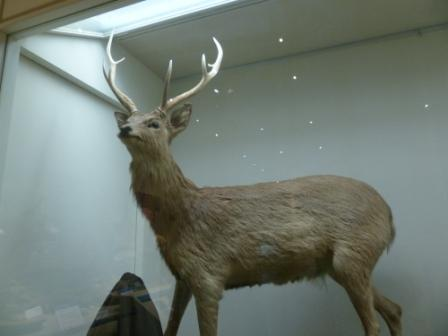 愛媛県総合科学博物館 動物 2