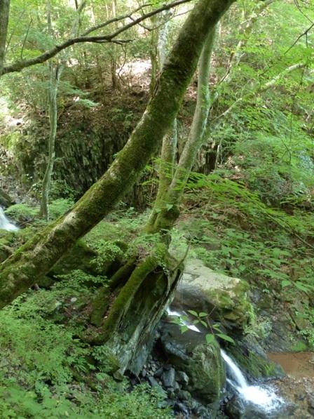 岩の上の木