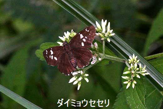 IMG_0156_.jpg