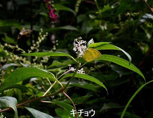 IMG_0362_.jpg