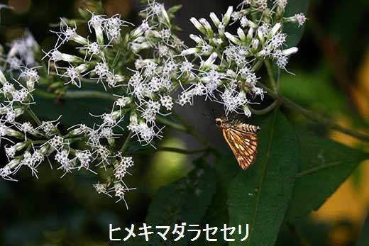 IMG_0601_.jpg