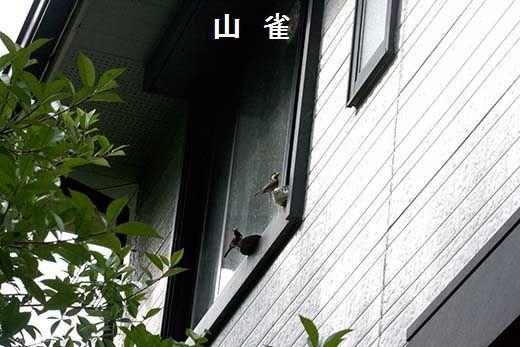 IMG_0982_.jpg