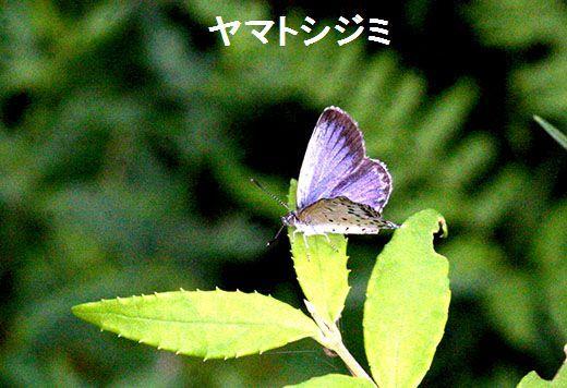 IMG_1272_.jpg