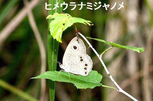 IMG_1283_.jpg