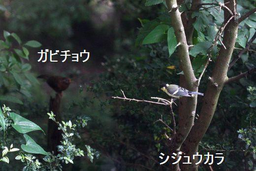 IMG_9602_.jpg