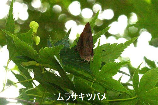 IMG_9636_.jpg