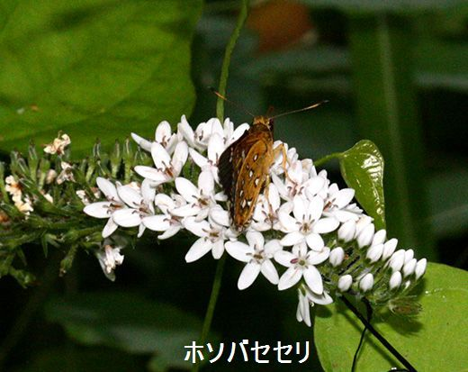 IMG_9694_.jpg