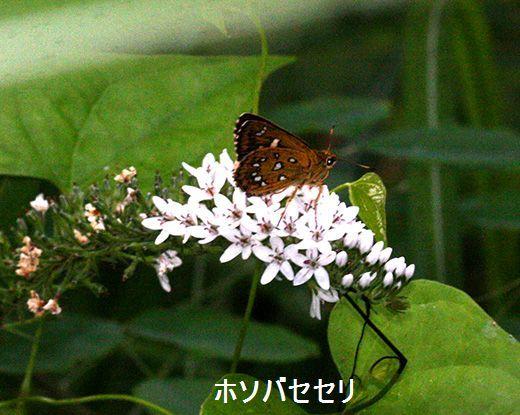 IMG_9705_.jpg