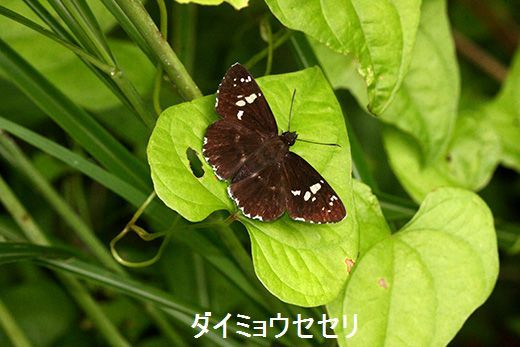 IMG_9928_.jpg