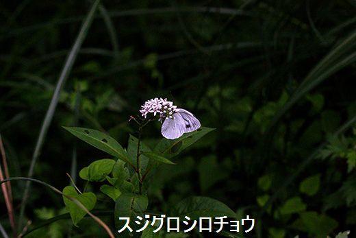 IMG_9932_.jpg