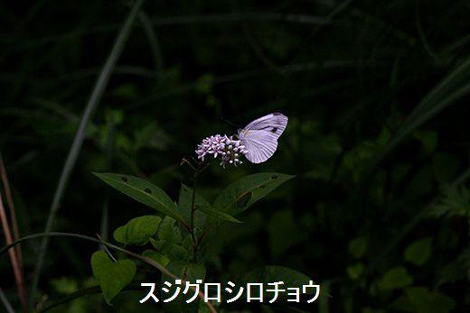 IMG_9933_.jpg