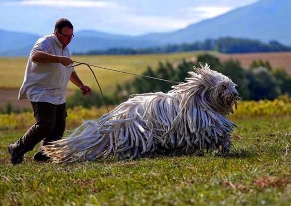 dogモップ犬