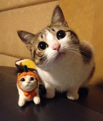 cats_yuria.jpg