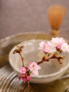 Sakura-cha