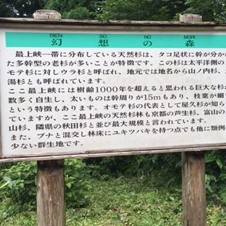 幻想の森4