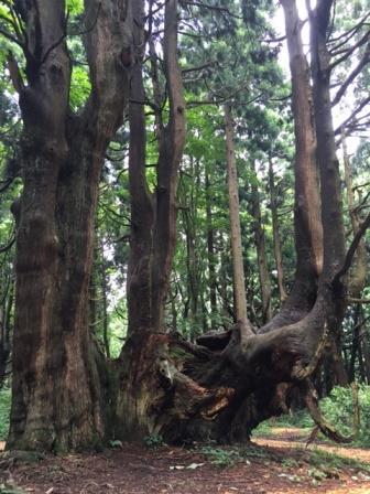 幻想の森7