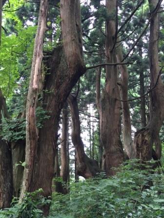 幻想の森8