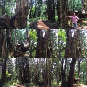 幻想の森9