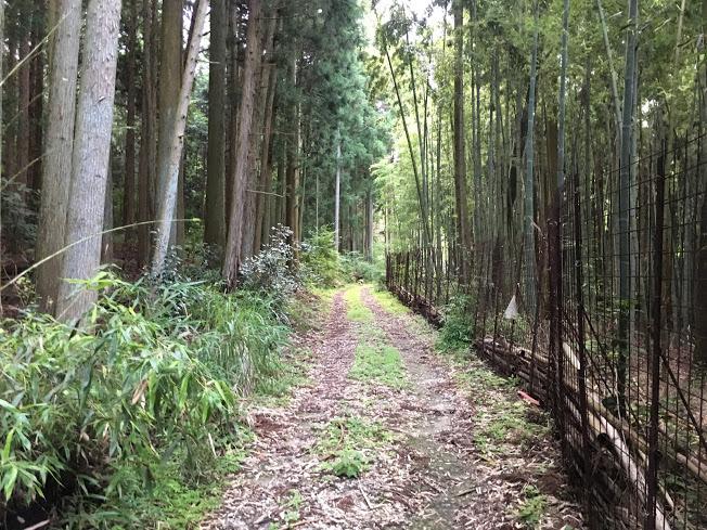 2017鴻応山/登山道