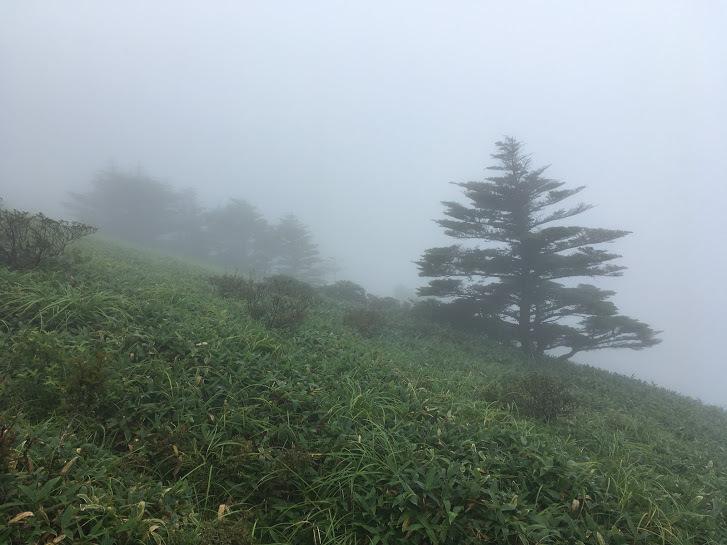 2017瓶ヶ森/霧の笹原