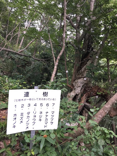 2017氷ノ山/七樹