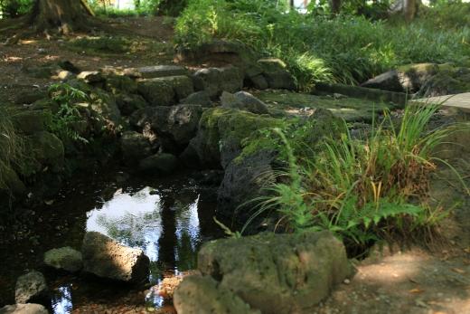 三島市 公園