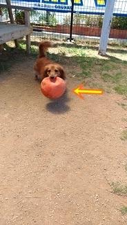 ボールしぼんぬ