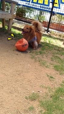 へっこみボール
