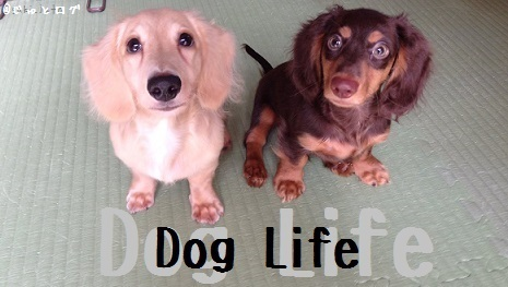 DogLife_Title2.jpg