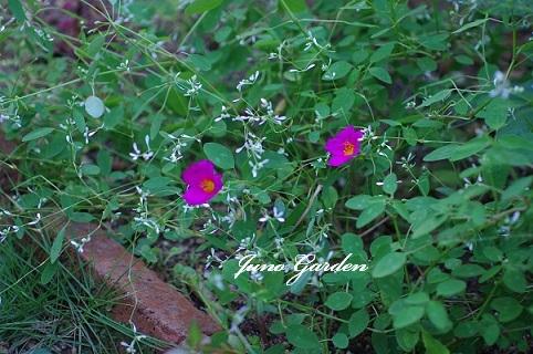 花壇170901