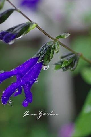 雨170907