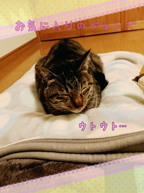 17-03-10-23-23-16-299_deco.jpg