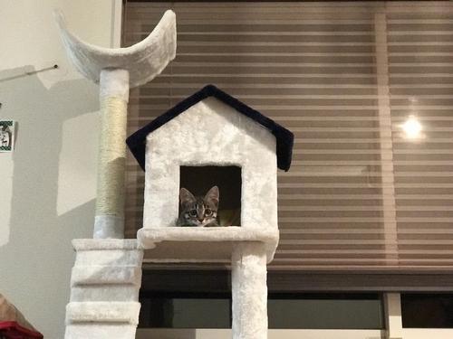 メイタワー小屋