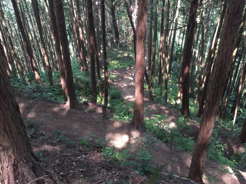 吉野梅郷北53