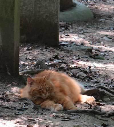 170715猫2