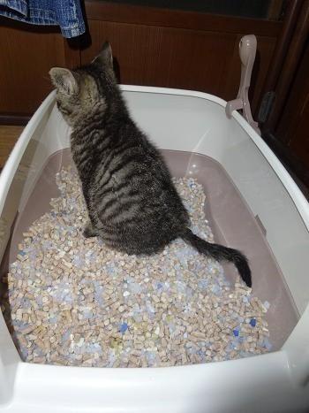 ミントトイレ成功