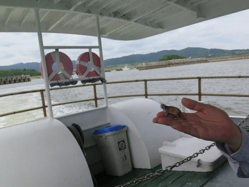 西表島と波照間で拾ったイリオモテヤマネコ