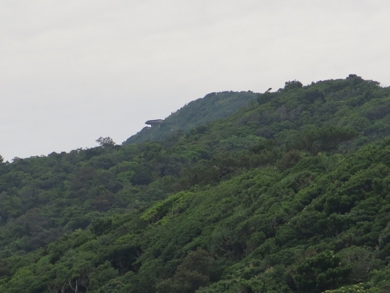 石垣島 ヤラブ岳