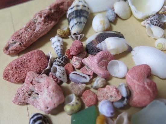 石垣島 電信屋下 貝殻