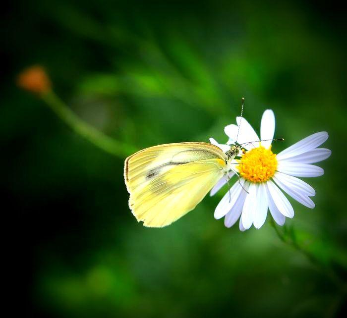 ●●A LOMO蝶2 2017・9・4雪国植物園_34