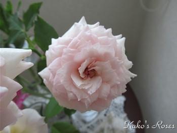 s-IMG_0104k30.jpg