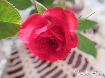 s-IMG_0269k30.jpg