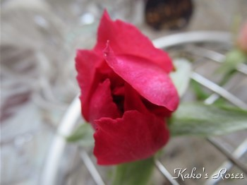 s-IMG_0354k30.jpg