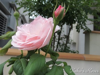 s-IMG_0522k30.jpg