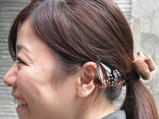 髪飾りアサギマダラ