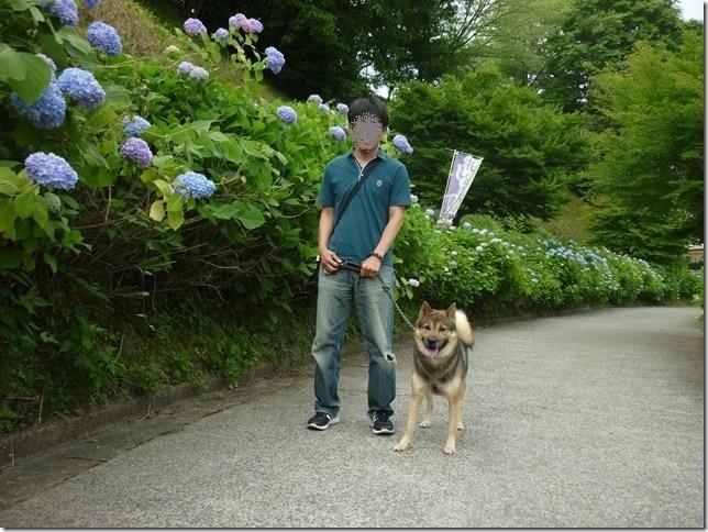 20170611花菖蒲-02