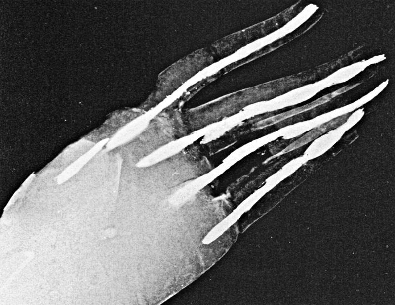 木心乾漆菩薩像の右手先のX線撮影写真~手の掌の真ん中あたりに珠の影が見える(本間紀夫著「X線による木心乾漆像の研究」1988刊所載写真)